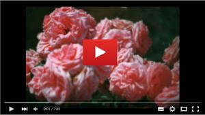 VIDEOS en PEPINIERE